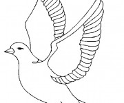 Coloriage et dessins gratuit Une Colombe à imprimer