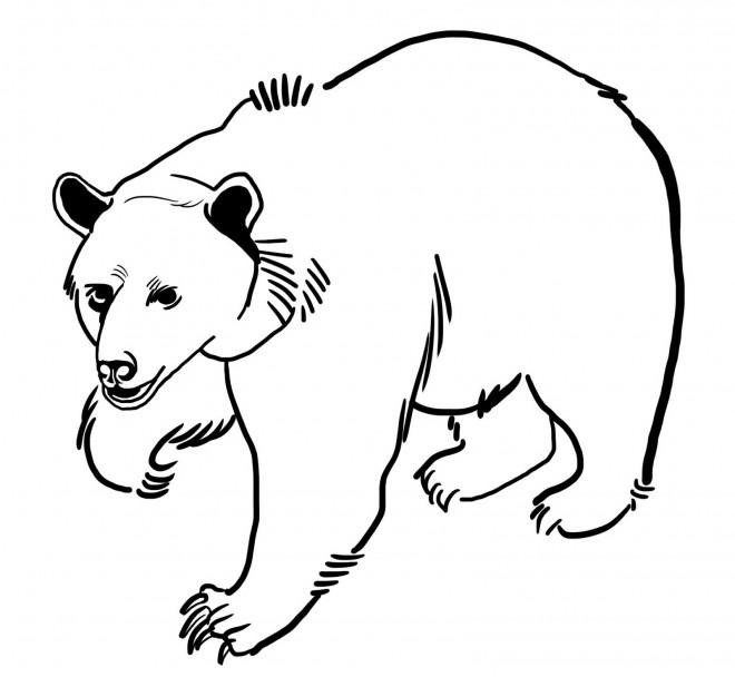 Coloriage ours grizzly dessin gratuit imprimer - Dessin de grizzly ...