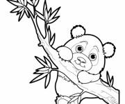 Coloriage Bébé Panda sur l'arbre