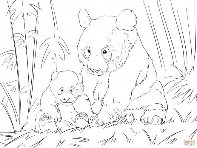 Coloriage et dessins gratuits Panda et son bébé dans la forêt à imprimer