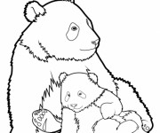 Coloriage et dessins gratuit Panda et son petit à imprimer