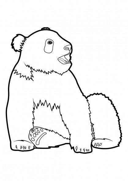 Coloriage et dessins gratuits Panda géant à imprimer
