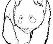 Coloriage et dessins gratuit Panda géant facile à imprimer