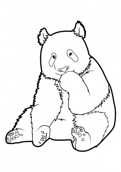Coloriage et dessins gratuits Panda pour enfant à imprimer