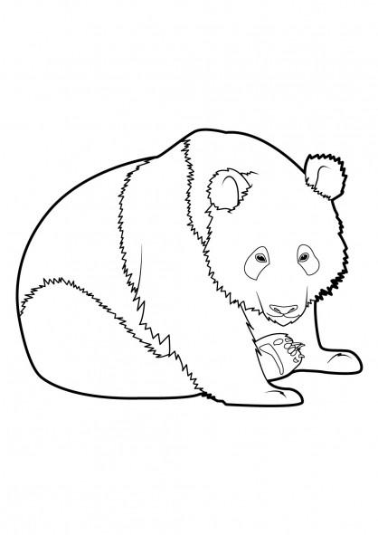 Coloriage et dessins gratuits Panda se repose à imprimer