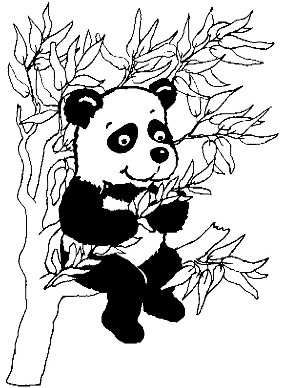 Coloriage et dessins gratuits Petit Panda sur l'arbre à imprimer
