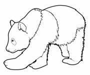 Coloriage et dessins gratuit Un gros Panda à imprimer