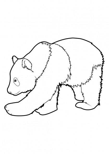 Coloriage un gros panda dessin gratuit imprimer - Coloriage petit panda ...
