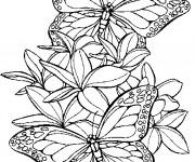 Coloriage dessin  Papillon 4