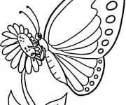 Coloriage dessin  Papillon 8