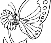 Coloriage et dessins gratuit Papillon couleur à imprimer