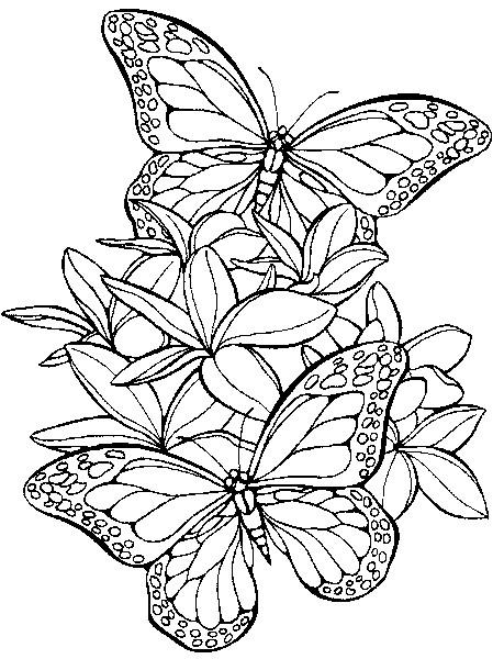 Coloriage et dessins gratuits Papillons en vol à imprimer
