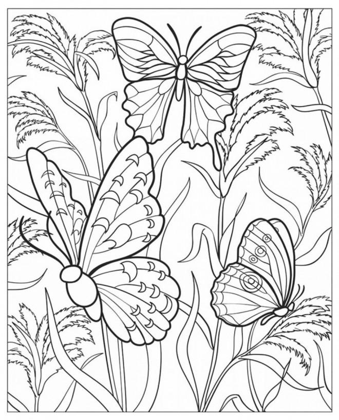 Coloriage papillons multicolores dessin gratuit imprimer - Mandala paysage ...