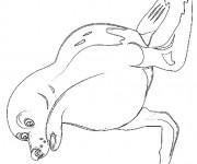 Coloriage et dessins gratuit Phoque 10 à imprimer
