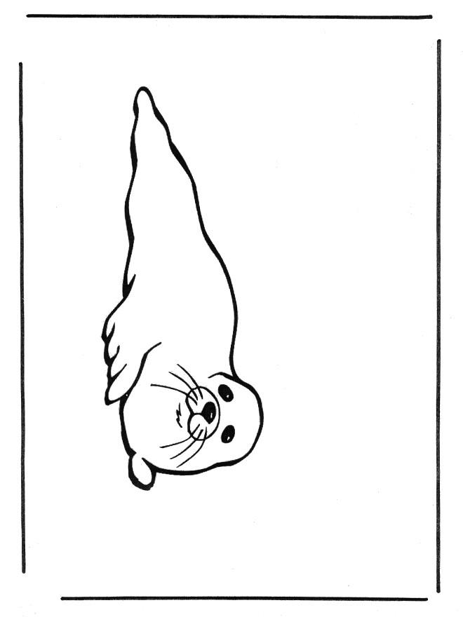 Coloriage et dessins gratuits Phoque à télécharger à imprimer