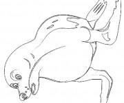 Coloriage et dessins gratuit Phoque au crayon à imprimer