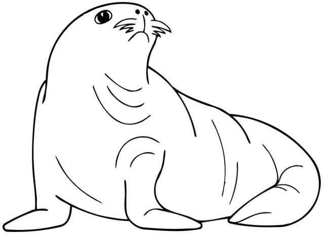 Coloriage phoque banquise dessin gratuit imprimer - Coloriage de phoque ...
