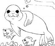 Coloriage et dessins gratuit Phoque dans la mer à imprimer