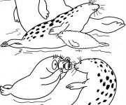 Coloriage Phoque dessin animé
