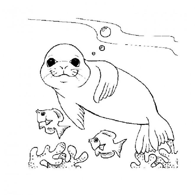 Coloriage et dessins gratuits Phoque et Corail à imprimer