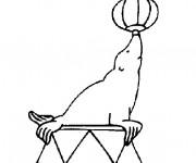 Coloriage Phoque joue au ballon au cirque