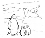 Coloriage Phoques et Pingouins