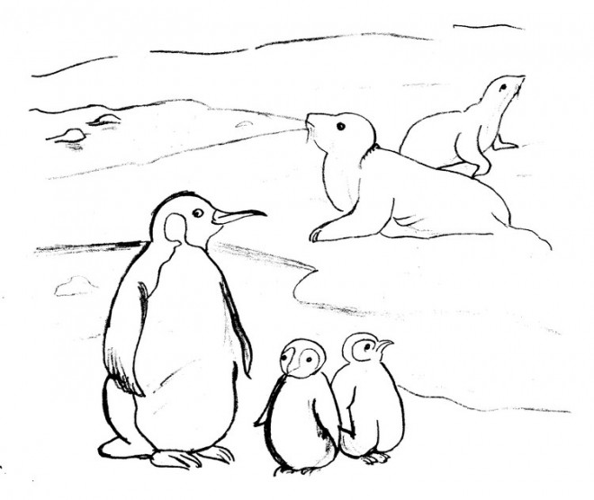 Coloriage et dessins gratuits Phoques et Pingouins à imprimer
