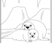 Coloriage et dessins gratuit Phoques polaire à imprimer