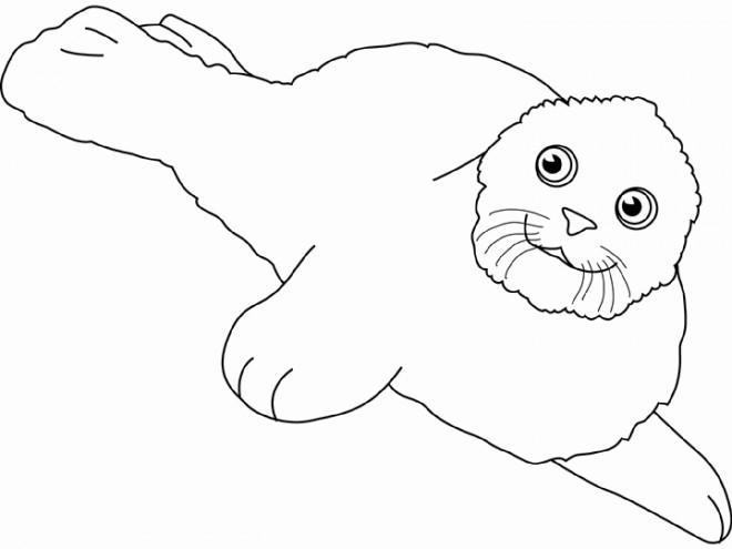 Coloriage et dessins gratuits Un beau Phoque à imprimer
