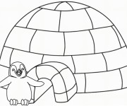 Coloriage dessin  Pingouin 19
