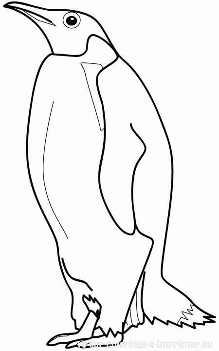 Coloriage et dessins gratuits Pingouin en ligne à imprimer