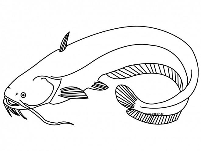Coloriage et dessins gratuits Poisson Saumon à imprimer