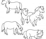 Coloriage Poney et chevaux