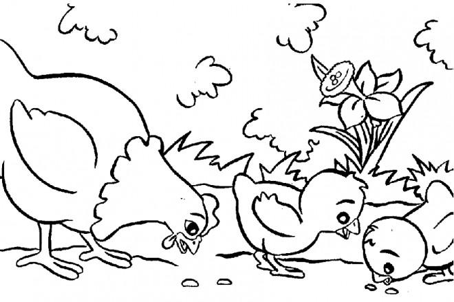 Coloriage et dessins gratuits Poule 16 à imprimer