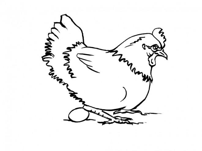 Coloriage et dessins gratuits Poule 23 à imprimer