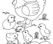 Coloriage Poule 28