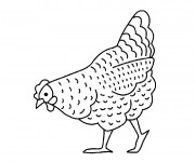Coloriage et dessins gratuit Poulet cherche à manger à imprimer