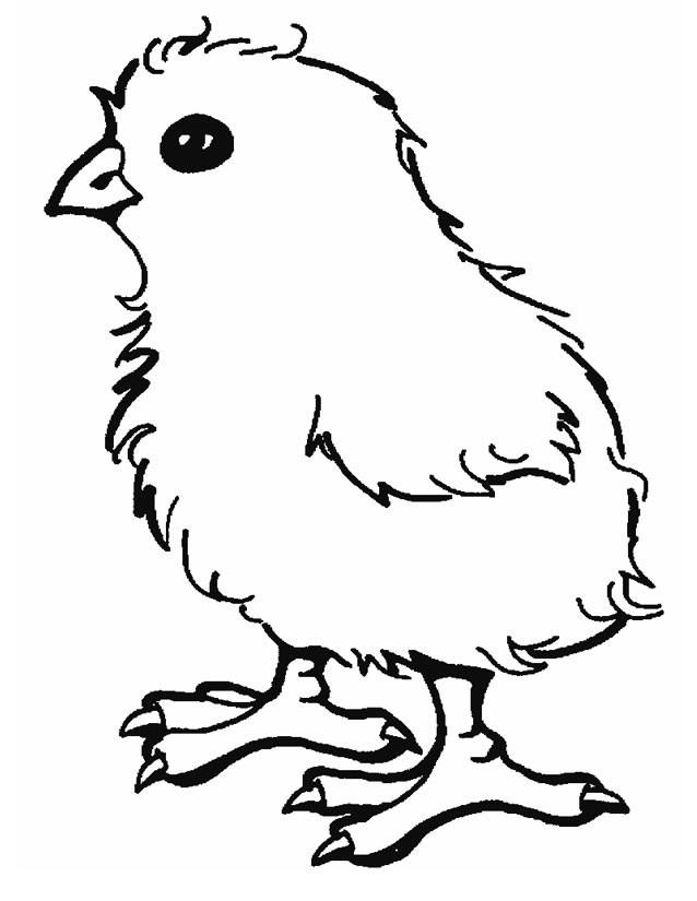 Coloriage et dessins gratuits Poussin en couleur à imprimer