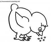 Coloriage Poussin qui mange