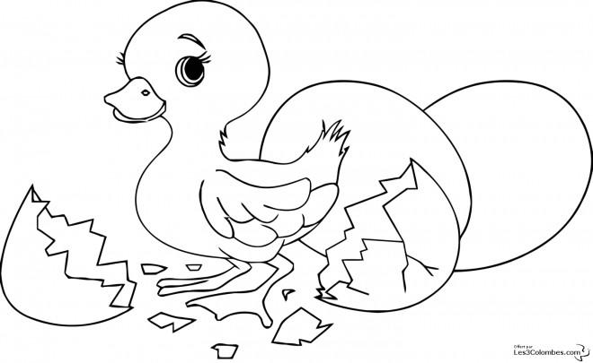 Coloriage poussin trop beau dessin gratuit imprimer - Trop beau dessin ...