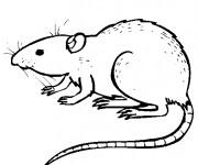 Coloriage dessin  Rat 1