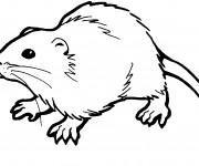 Coloriage dessin  Rat 2