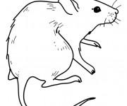 Coloriage et dessins gratuit Rat à découper à imprimer