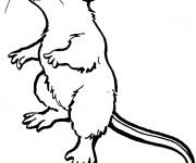 Coloriage et dessins gratuit Rat debout à imprimer