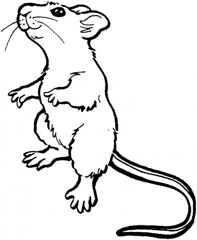 Coloriage et dessins gratuits Rat debout à imprimer
