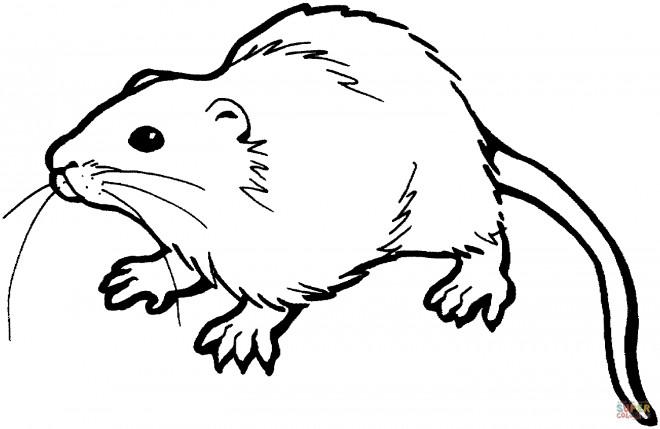 Coloriage et dessins gratuits Rat en vecteur à imprimer