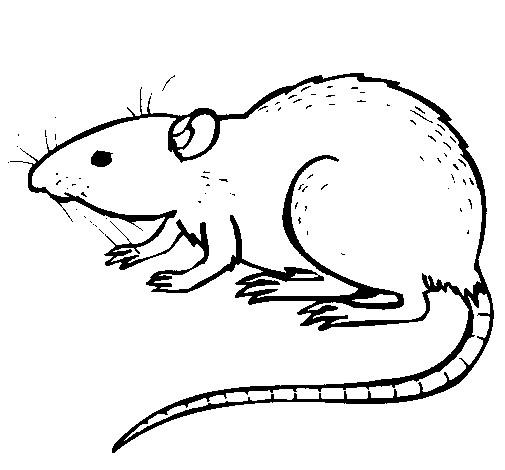 Coloriage et dessins gratuits Rat facile à imprimer