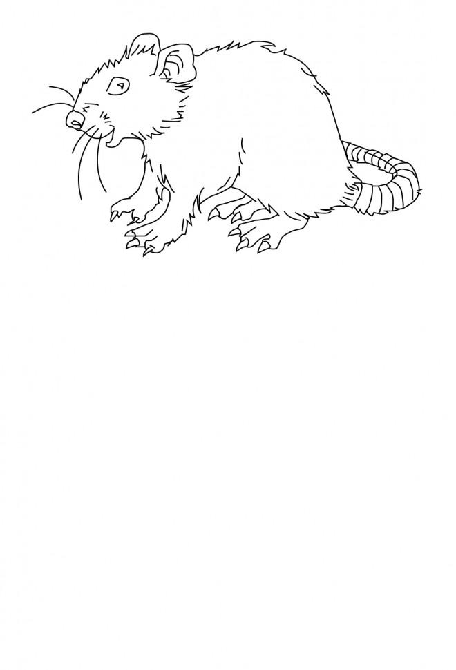 Coloriage et dessins gratuits Rat stylisé à imprimer