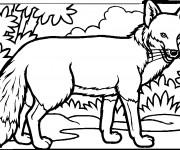 Coloriage dessin  Renard 12