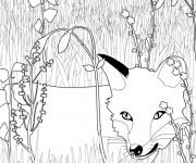Coloriage dessin  Renard 15